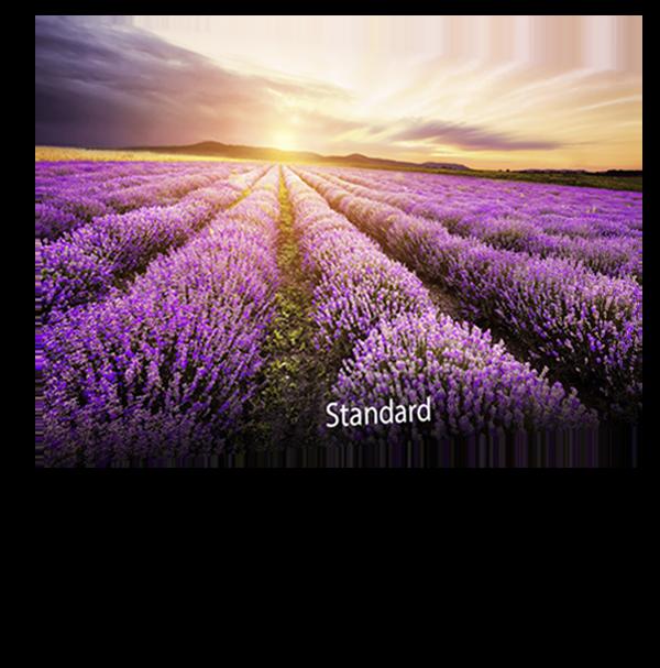 ASUS-Designo-BE279QSK-blue-light-filter-standard